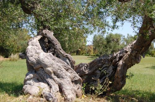foto Scalilla L'Agriturismo (Martignano)