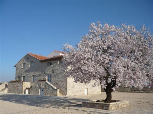Guesthouse Pensione Dalmazia front view
