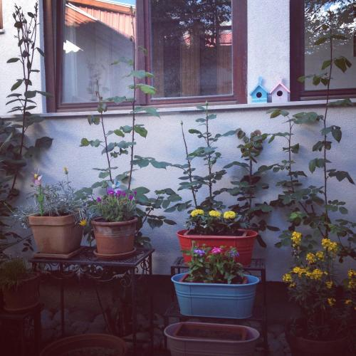 Tataragic Apartment