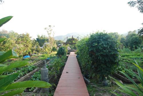 Baan Thung Lakorn Organic Farmstay By Phusompor