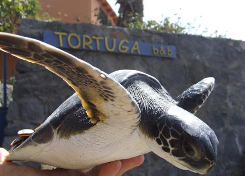 Tortuga B&B, São Filipe