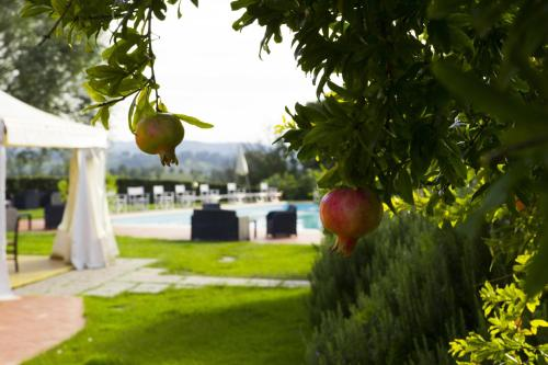 Agriturismo Marrucola, San Miniato