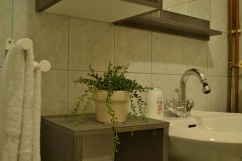 Apartment Zeleni Val