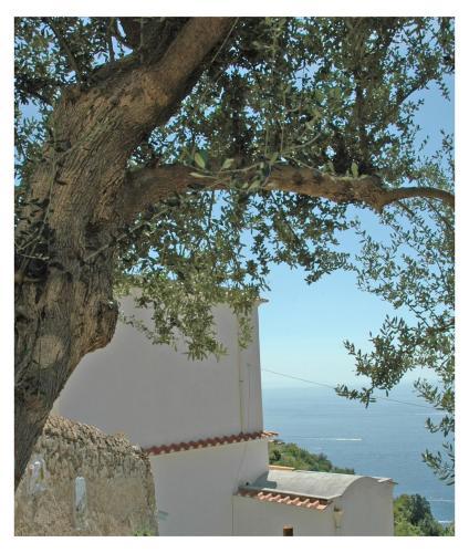 Picture of Al Poggio Antico