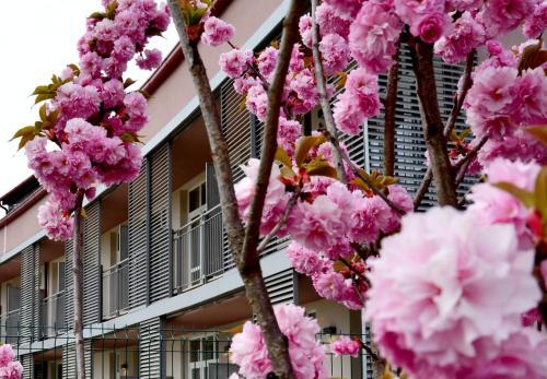 foto Privilege Apartments (Bernareggio)