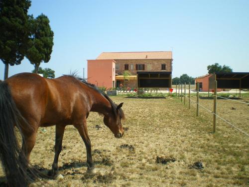 A conero ranch case di campagna porto for Ranch di case fresche