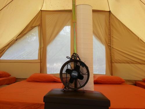 Canopy Tribe