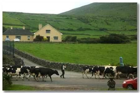 Photo of Garveys Farmhouse B&B Hotel Bed and Breakfast Accommodation in Ventry Kerry