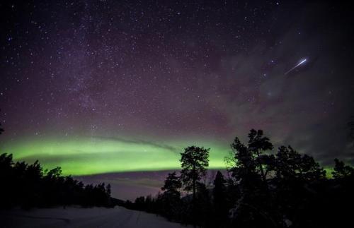 Aurora & Husky Forest Camp