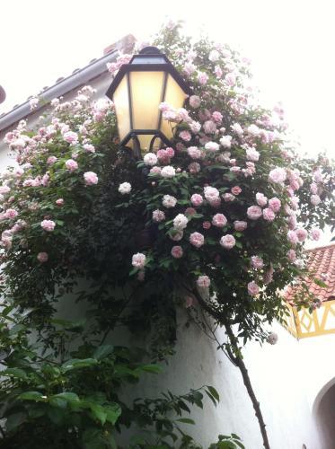 Patio das Flores