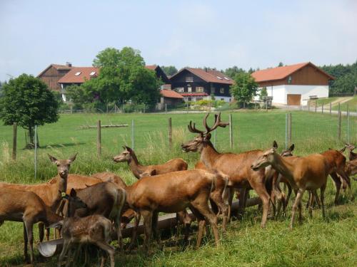 Giglerhof