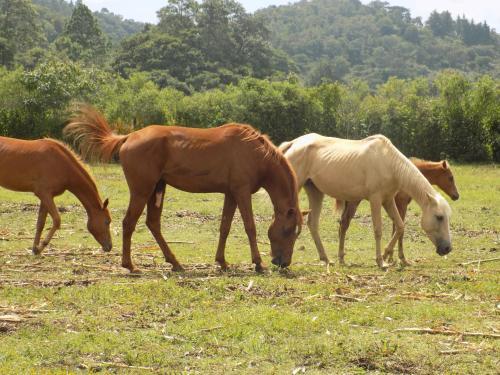 Rancho Hostal La Escondida Eco Park