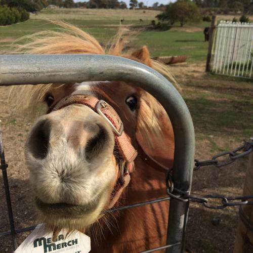 Clunes Farmstay - Rejuvenate Stays