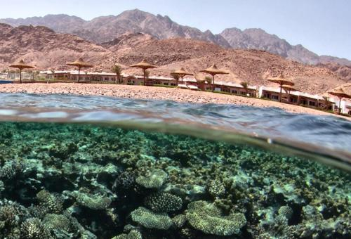 Canyon Estate Residence Dahab