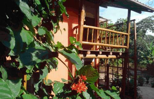 Concha Tropical Flat
