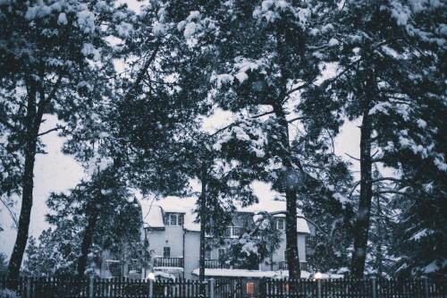 Отель Самшит 555