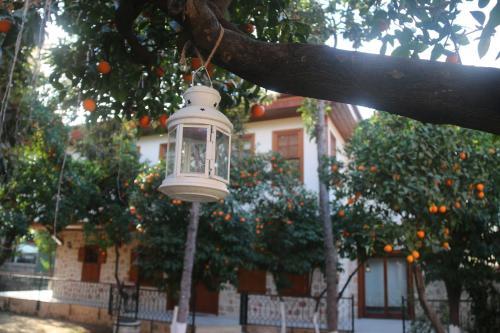 citrus garden hotel online buchen bed breakfast europe With katzennetz balkon mit citrus garden hotel antalya