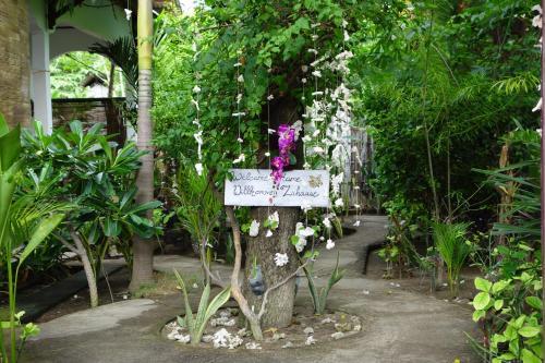 Gili Orchid