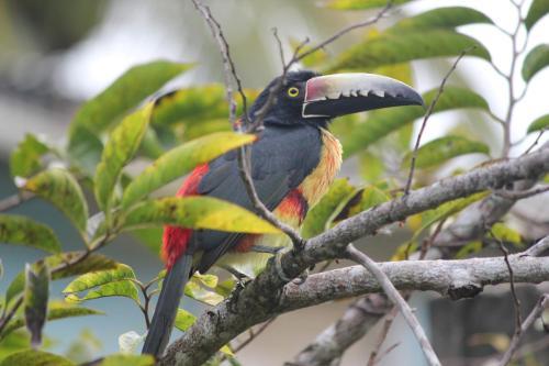 Nature Resort, Bermudian Landing