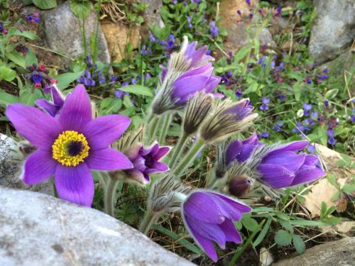 Penzión Skalná ruža - Kövirózsa panzió
