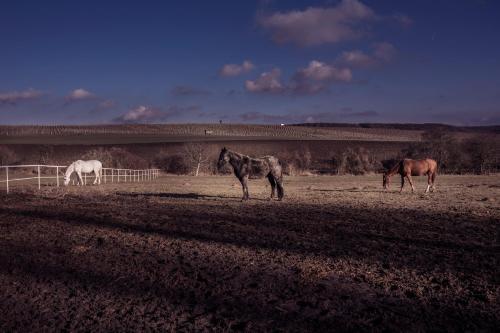 Na koni
