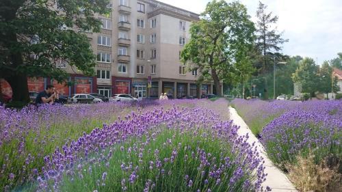 Отель Apartment Letná 2 0 звёзд Словакия