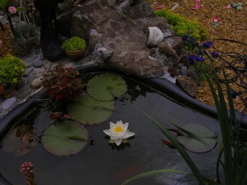 Au jardin d 39 eden poilley manche basse normandie normandy for Au jardin d eden evian