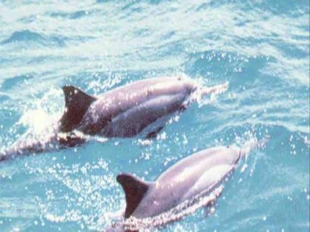 Solar dos Golfinhos