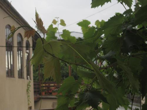 Гостевой дом Edena
