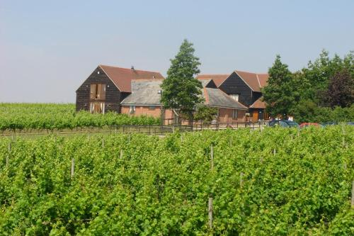 Mersea Island Vineyard