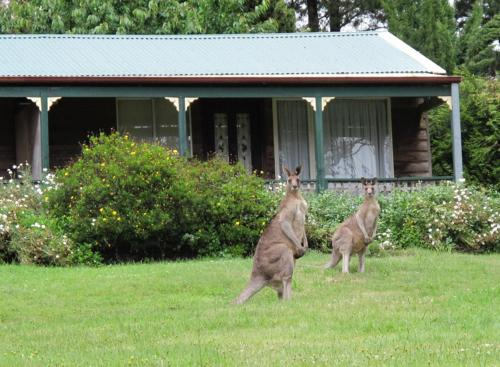 Cedar Lodge Cabins