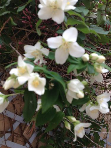 Le Jardin croix Roussien
