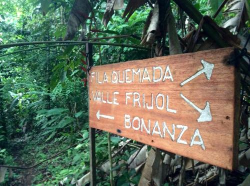 Bolita Rainforest Hostel and Cabinas