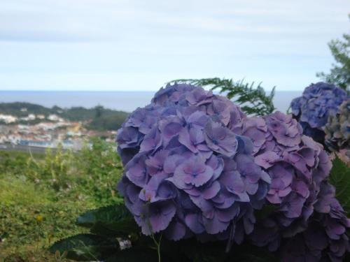 Family Holiday Villa Vacation Ponta Delgada