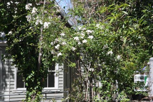 Foxglove Gardens