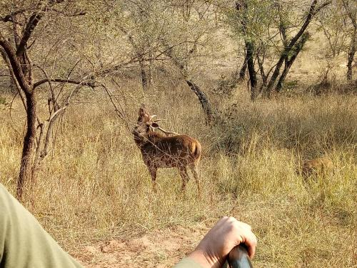 Jungle Friend Ranthambore