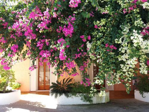 Constantinos Apartments, Lassi
