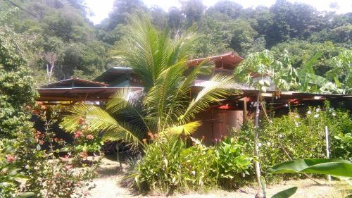 Simbiosis Costa Rica