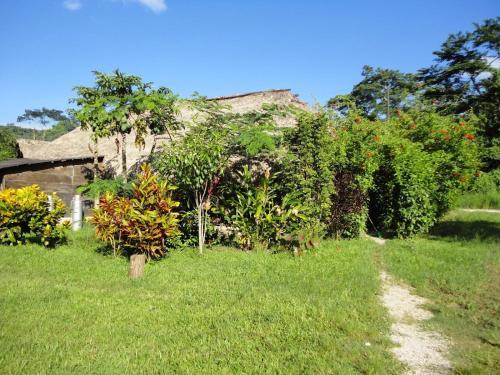 Ecolodge Kayon - Selva Lacandona