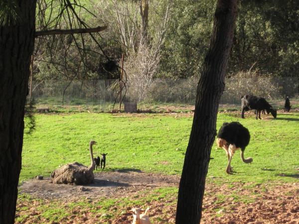 Casa Rural Los Nogales