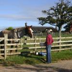 Strete Ralegh Farm