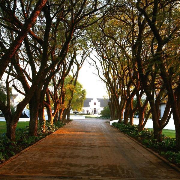 Kievits Kroon Gauteng Wine Estate
